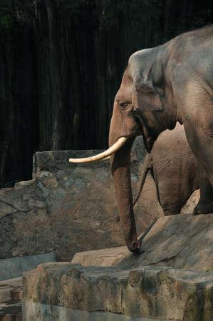 zoo as: Elephant Stock Photo