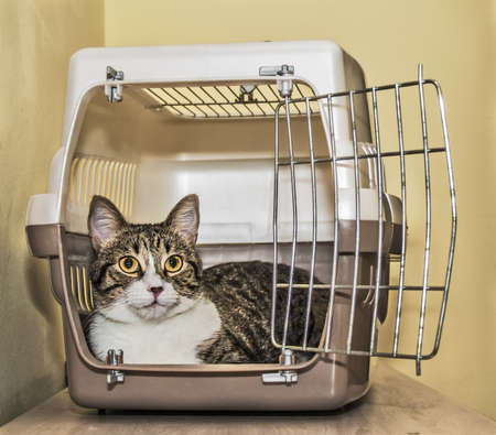 cage: Tabby cat inside a cat carrier box