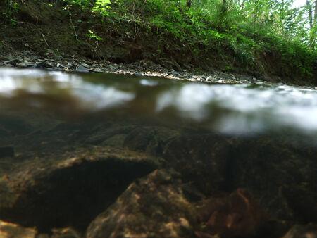 bourn: Bourn in forest-Underwater snap