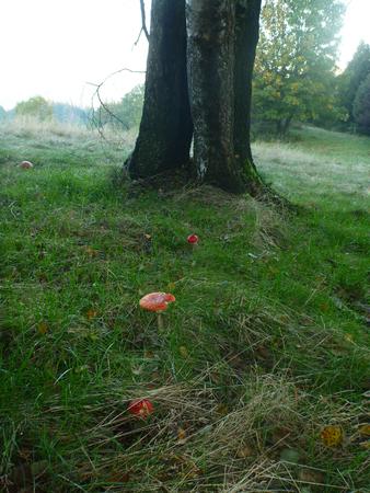 Tree trunk and mushrooms photo