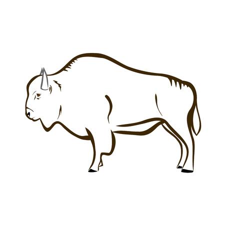endangered species: Bison (buffalo)