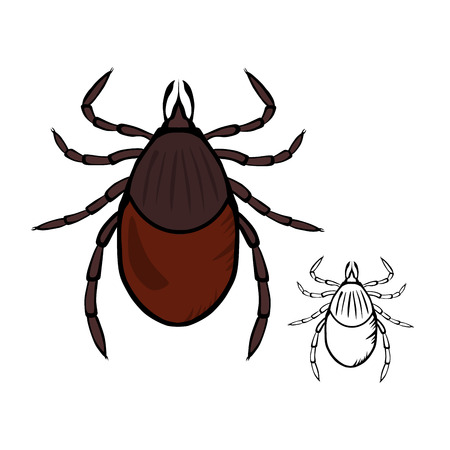lyme disease: The Castor Bean Tick Illustration