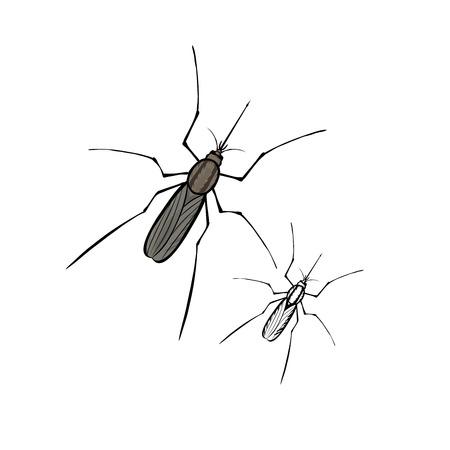 entomologist: Mosquito