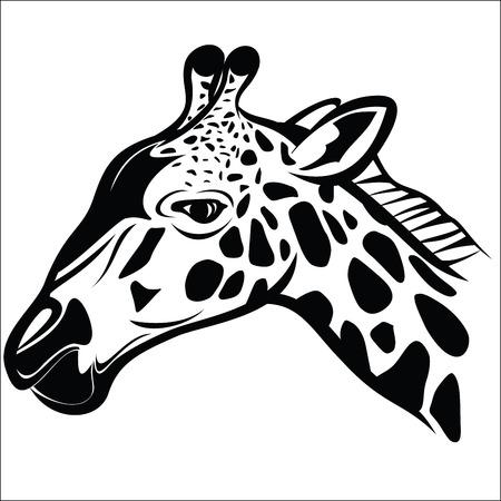 Giraffe head 1