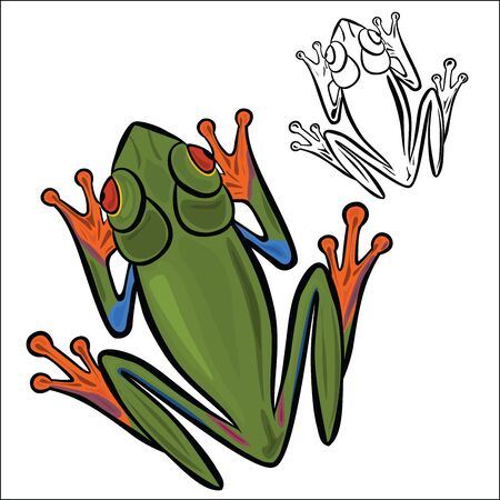 redeyed tree frog: Red-eyed tree frog Illustration
