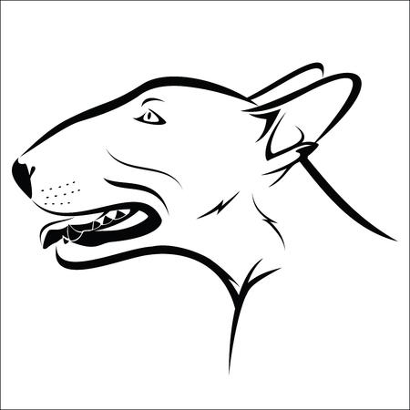 bullterrier: Bull terrier