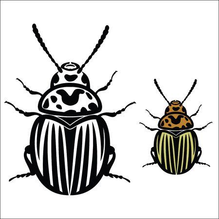 colorado: Colorado Potato Beetle Illustration