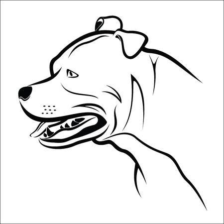 Pitbull dog head Çizim