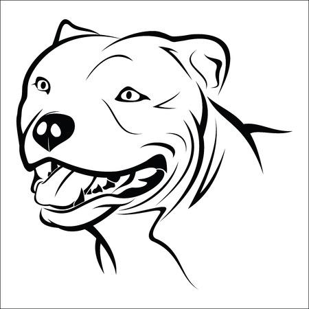 wild dog: Pitbull