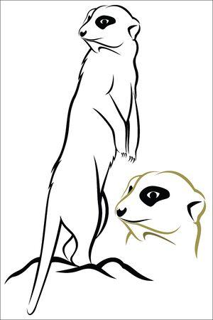 lookout: Meerkat