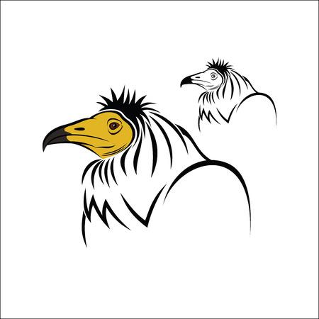 vulture: Egyptian Vulture Illustration