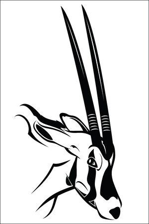 herbivore natural: Gemsbok antelope