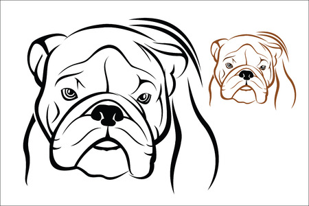 wrinkled face: English Bulldog