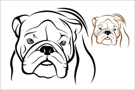 muscly: English Bulldog