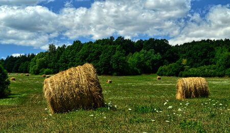 Straw bales on meadow Stok Fotoğraf