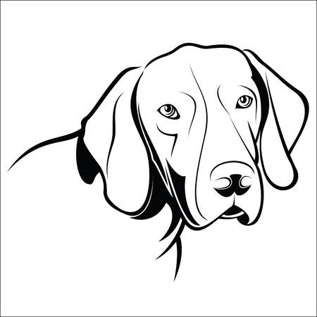 shorthaired: German Shorthaired Pointer Vectores