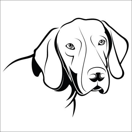 German Shorthaired Pointer Illustration