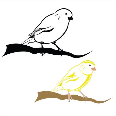 wild canary: canary