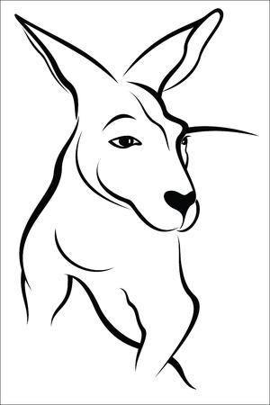 gazing: Kangaroo Illustration
