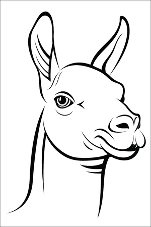 llama: llama Illustration