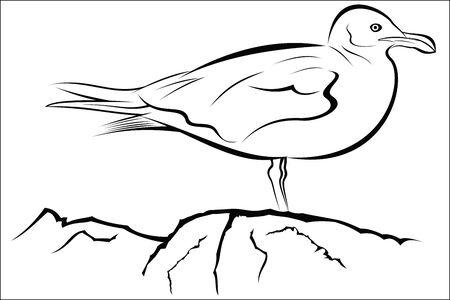 seagull Çizim