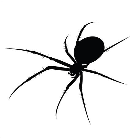 Spider Stok Fotoğraf - 46147549