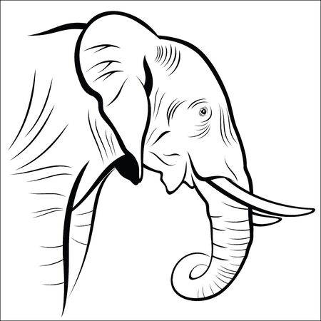 on white: Elephant on a white background