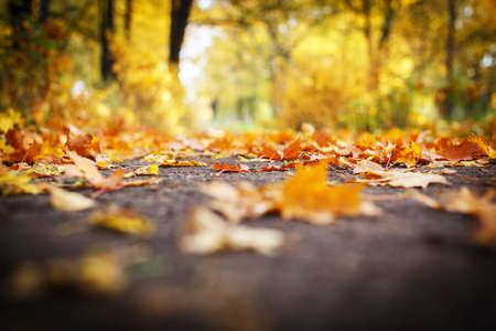 Bright picture of autumn leaves on asphalt photo