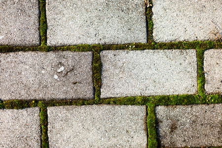 Moss trying to grow inbetween paving stones photo