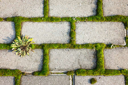 inbetween: Moss inbetween tiled cobble stones