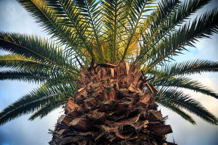 Close-up picture of palm tree over the blue sky photo