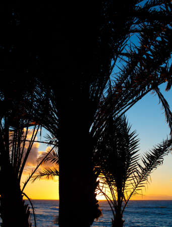 Bautiful sunset on the beach with palms on the foreground. photo