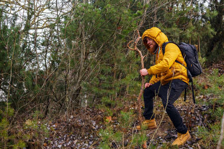 yellow jacket: Smiling man with beard in a forest. Dressed in yellow jacket, black bants, yellow boots, with stick and backpack. Stock Photo