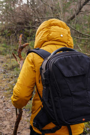 yellow jacket: Man from behind dressed in yellow jacket hold stick and wolking in a fores with backpack.