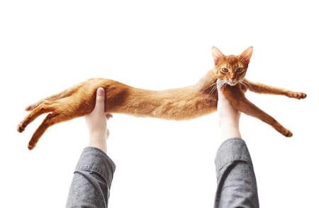 gato jugando: Juego de gato rojo lindo