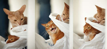 cats playing: Two red cats playing with each other. Three photos Stock Photo