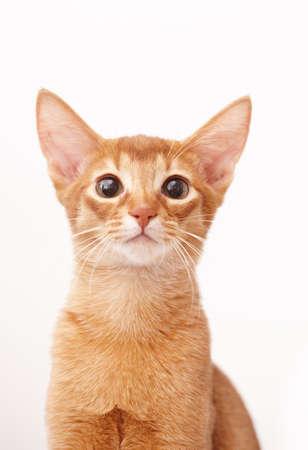 frisky: Playful cute little red cat. Stock Photo