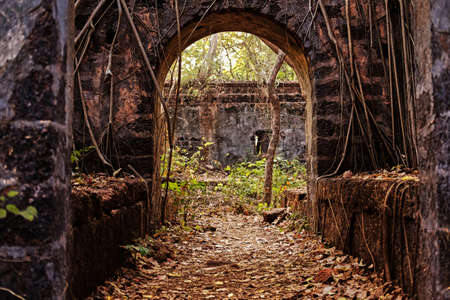 Old stone ruins in a jungle. Stock Photo
