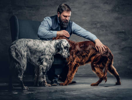 Portrait of stylish bearded male sits on a chair and his two Irish setter dogs.