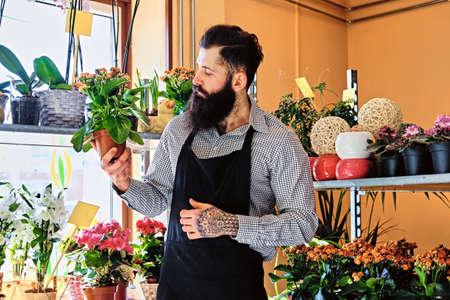 The bearded male flower seller holds flowers in a pot in a garden market shop.