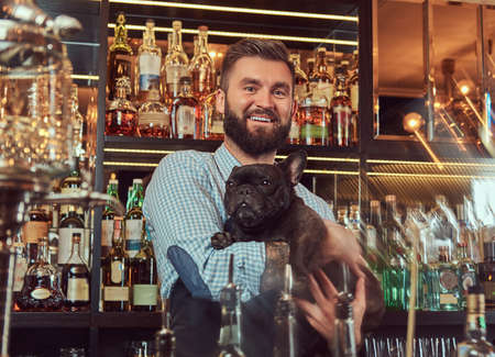 Cheerful stylish brutal barman in a shirt and apron keeps thoroughbred black pug at bar counter background.