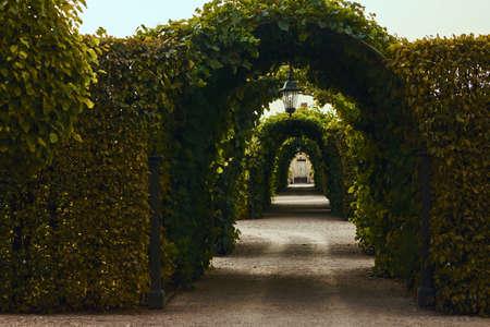 Arches aux feuilles frisées dans le parc. Bel endroit dans le jardin Banque d'images