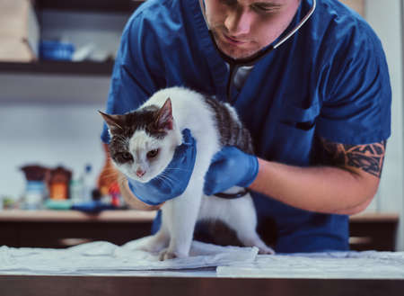 Veterinary doctor examining a sick cat with stethoscope in a vet clinic Stock Photo