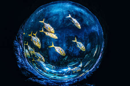 Beautiful aquarium of spherical shape with exotic fishes Banco de Imagens