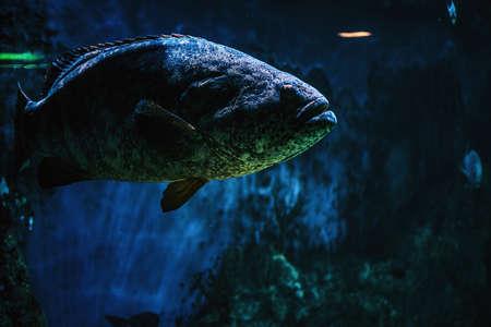 Close-up photo of a fish, life underwater in the Oceanarium