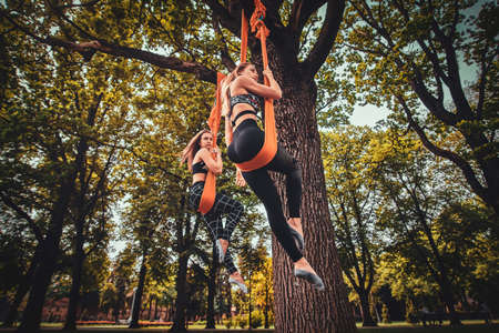 Low angle photo of attractive womens are posing for photographer on the slings which is fixed on big tree in the summer park.