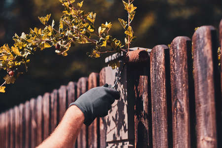 Old fences renovaiting process by worker. He apply brown paint with brush, wearing protective gloves.