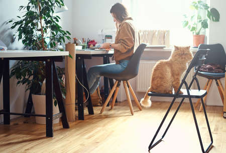 Adorable persian cat is sitting on the chair while his mistress is working at the desc. Banco de Imagens