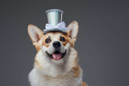 Funny happy doggy with top hat and bright brown fur