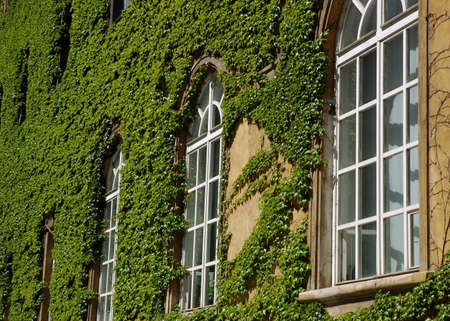 lak�hely: Windows of a library with a creeping leaves of wild wine